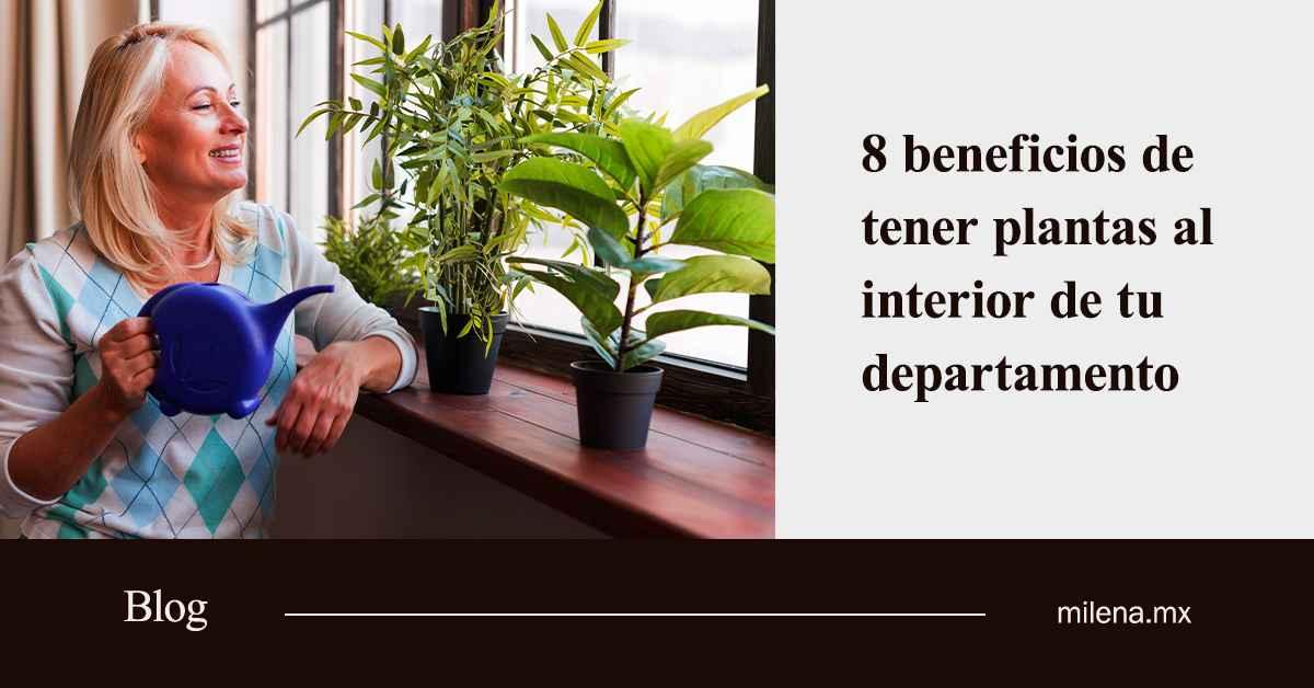 beneficios de tener plantas al interior de tu departamento